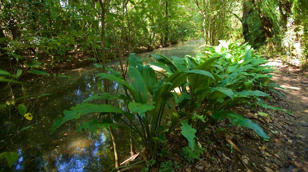 Kumarakom Bird Sanctuary เนื้อเรื่องที่ แม่น้ำหรือลำธาร