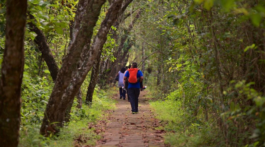 Kumarakom Bird Sanctuary แสดง ป่า ตลอดจน คนกลุ่มเล็ก