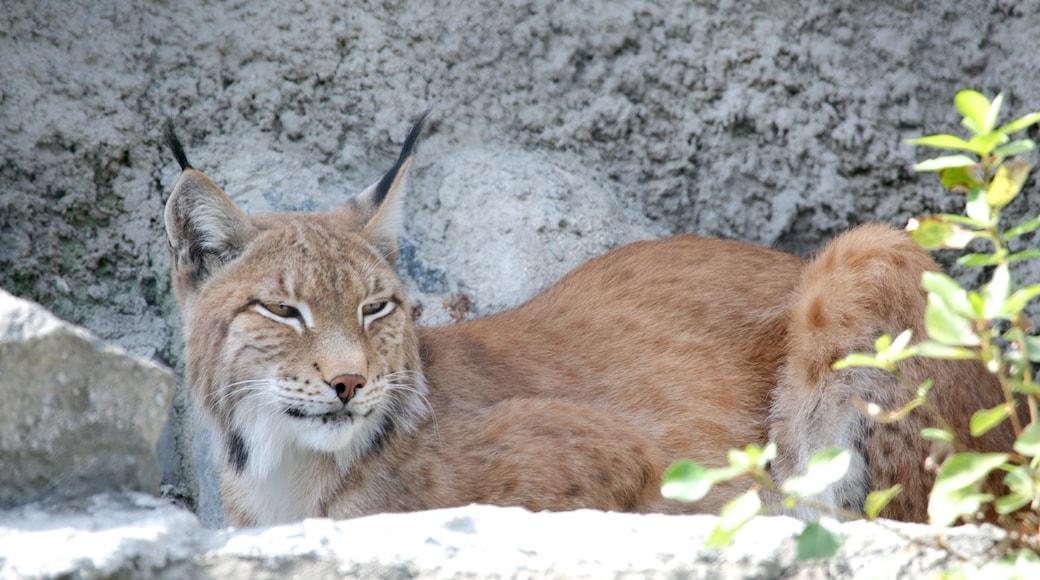 Zoo Moskau mit einem Tiere und gefährliche Tiere