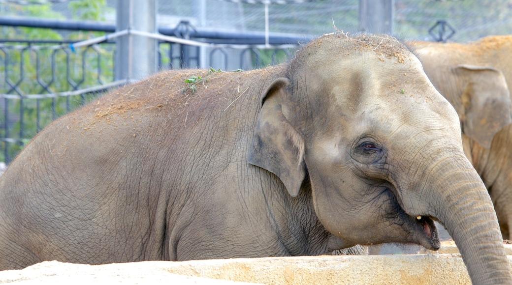 Zoo Moskau das einen Zootiere und Landtiere