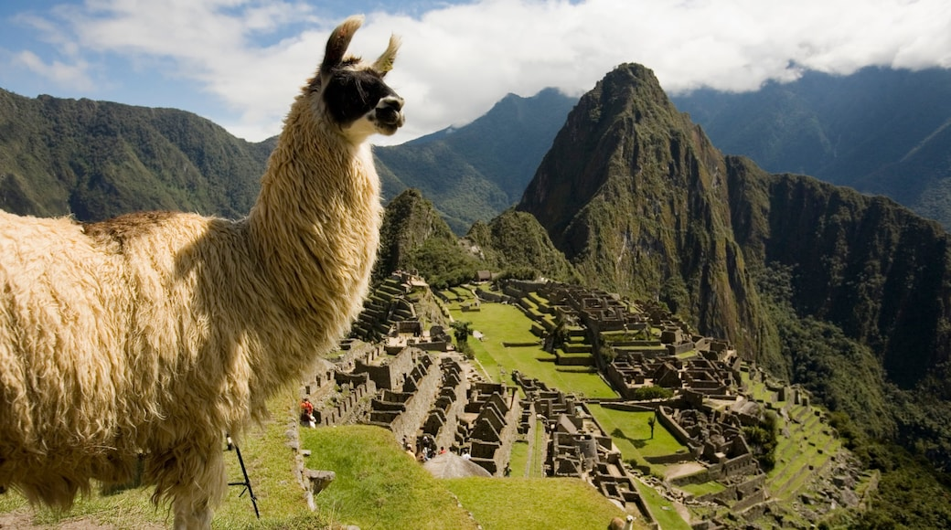 Huayna Picchu which includes mountains, heritage elements and animals