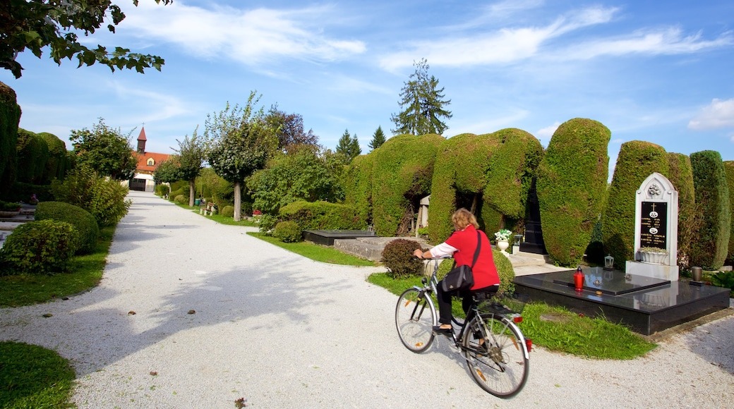Varazdin showing a garden and cycling