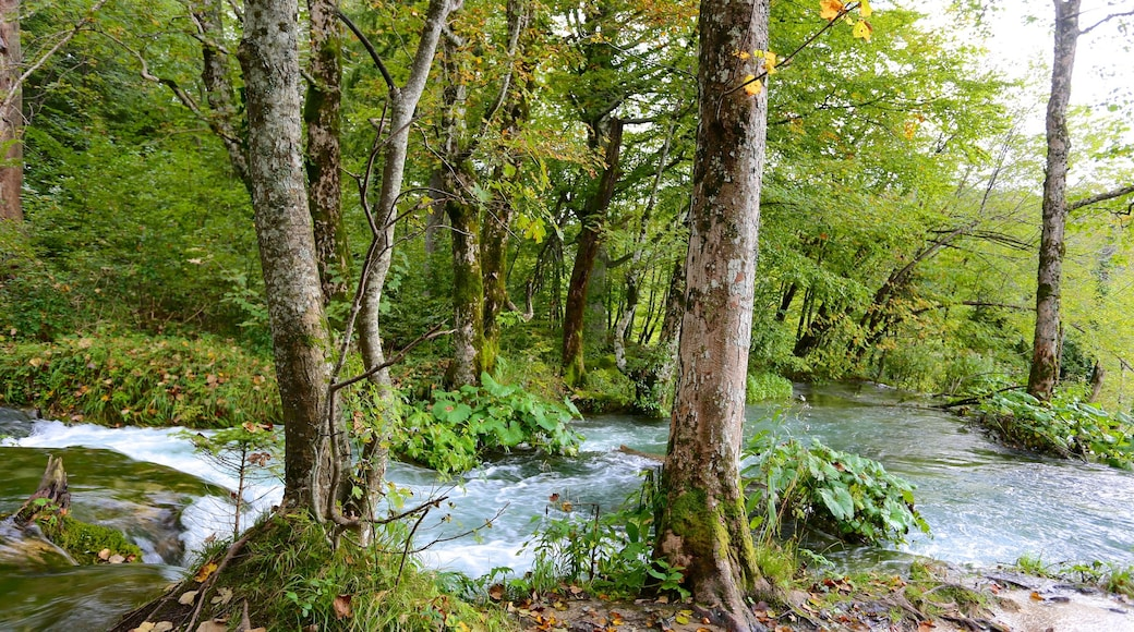 Plitvice Lakes National Park - Entrance 1 which includes rainforest, forest scenes and a river or creek