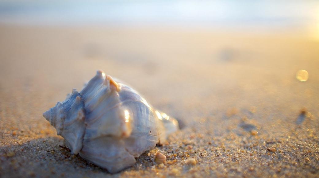 Cape Hatteras National Seashore que inclui uma praia