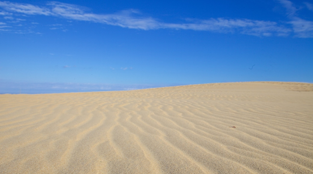 Jockey\'s Ridge State Park which includes tranquil scenes and desert views