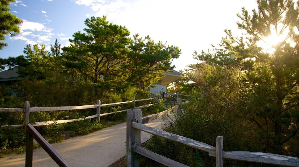 Cape Cod National Seashore showing a house