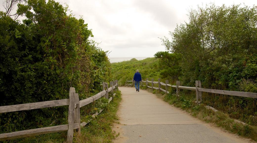 Coast Guard Beach showing hiking or walking