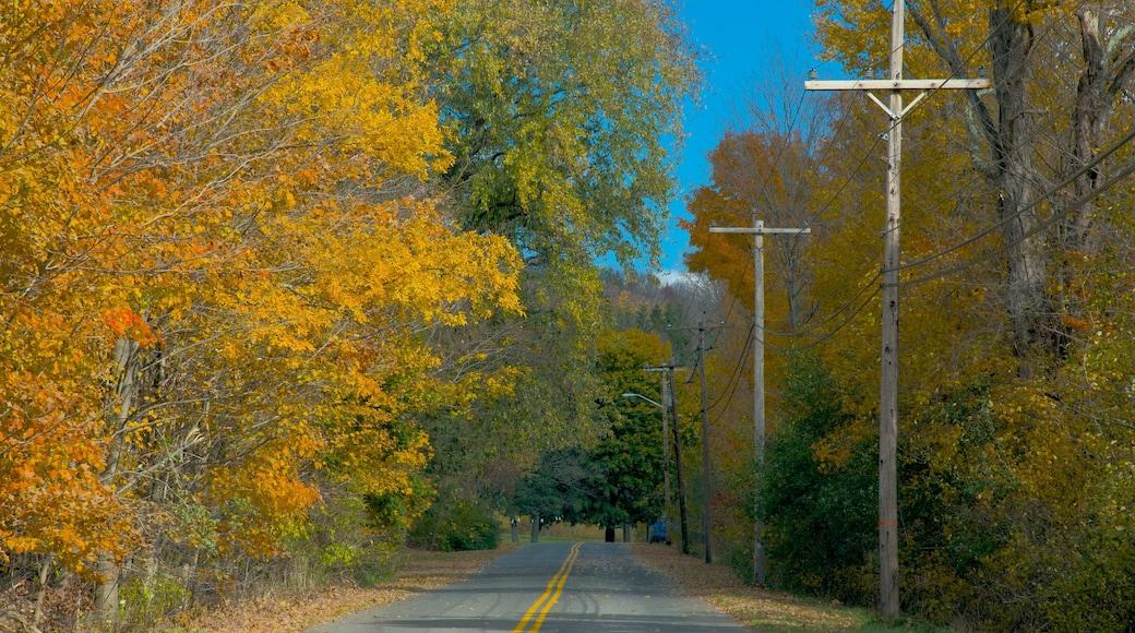 Hancock showing autumn colours
