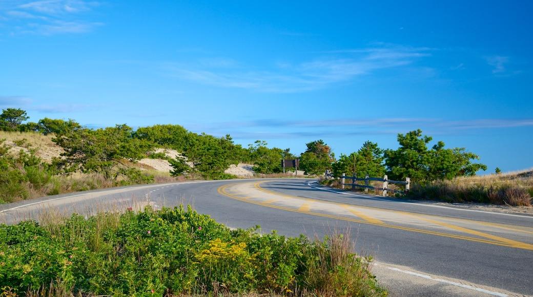 Cape Cod National Seashore which includes tranquil scenes