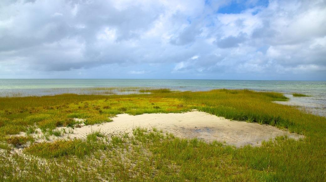 Skaket Beach featuring a sandy beach