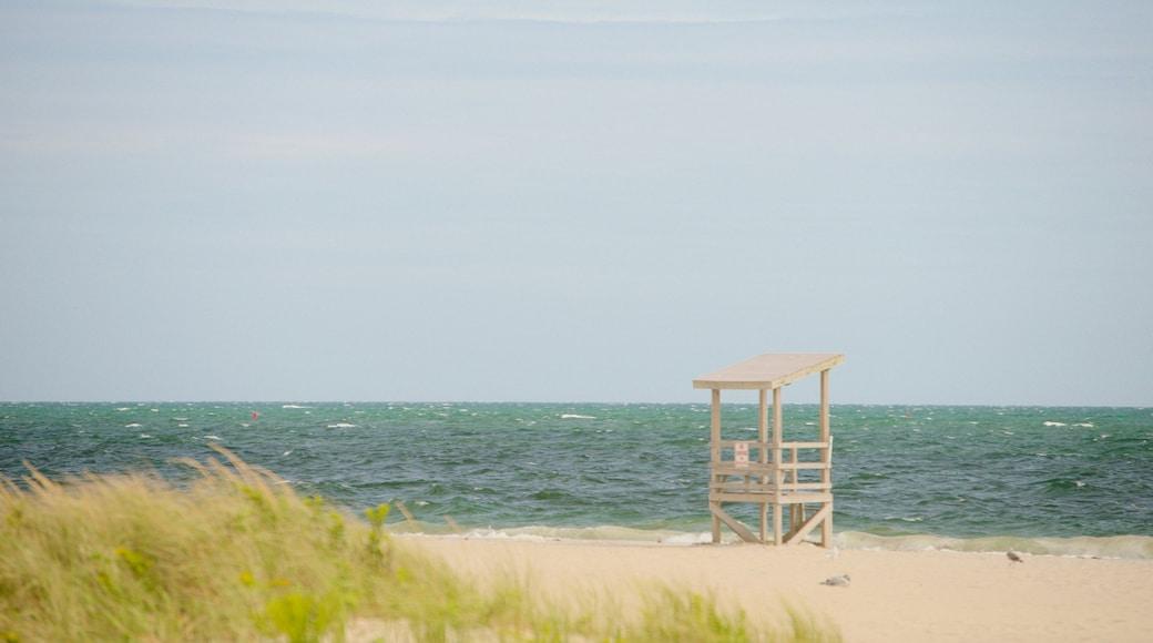 Seagull Beach mostrando uma praia de areia