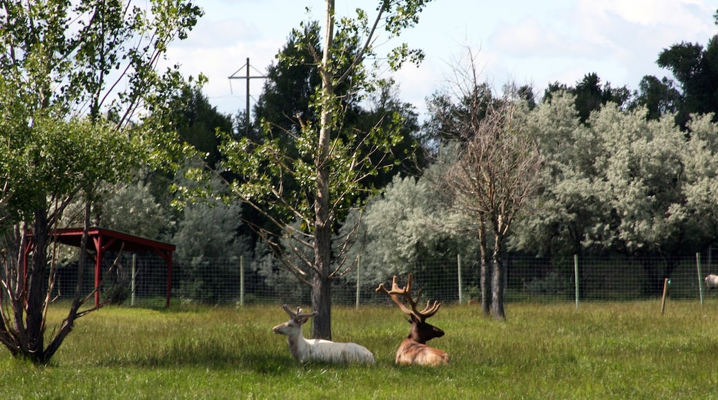 Rexburg johon kuuluu maaeläimet ja eläintarhan eläimet