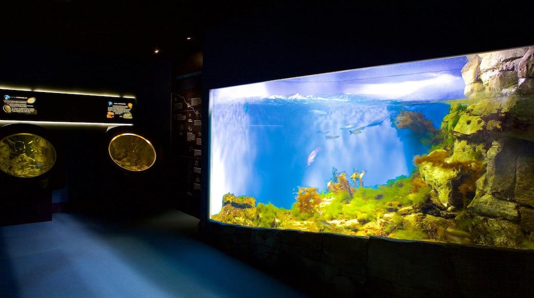 Aquarium La Rochelle which includes marine life