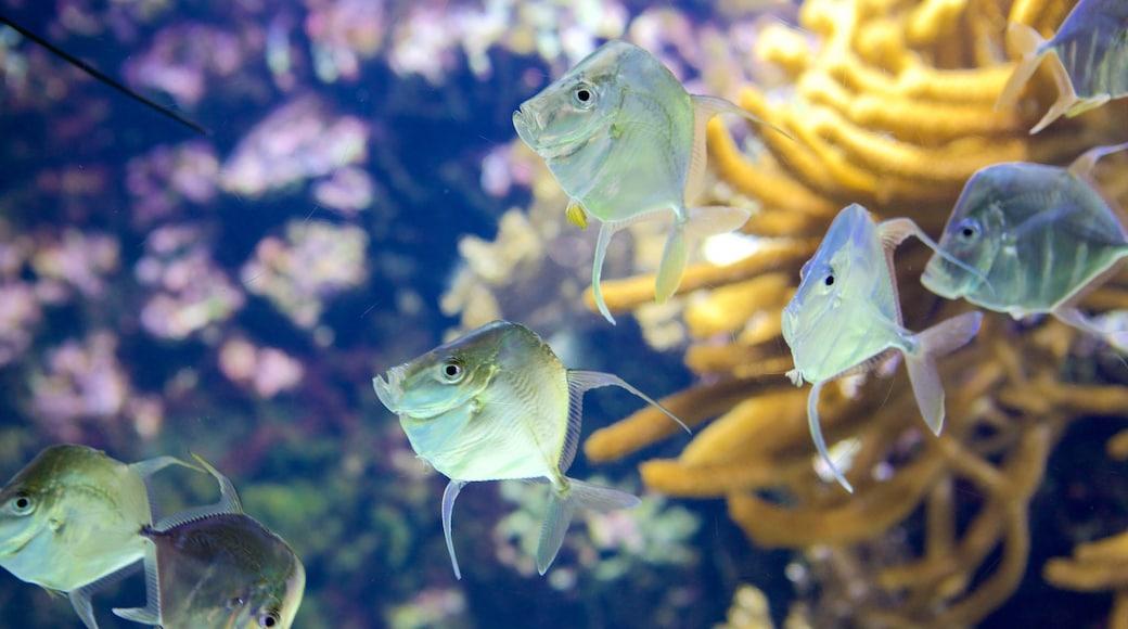 Aquarium La Rochelle featuring marine life
