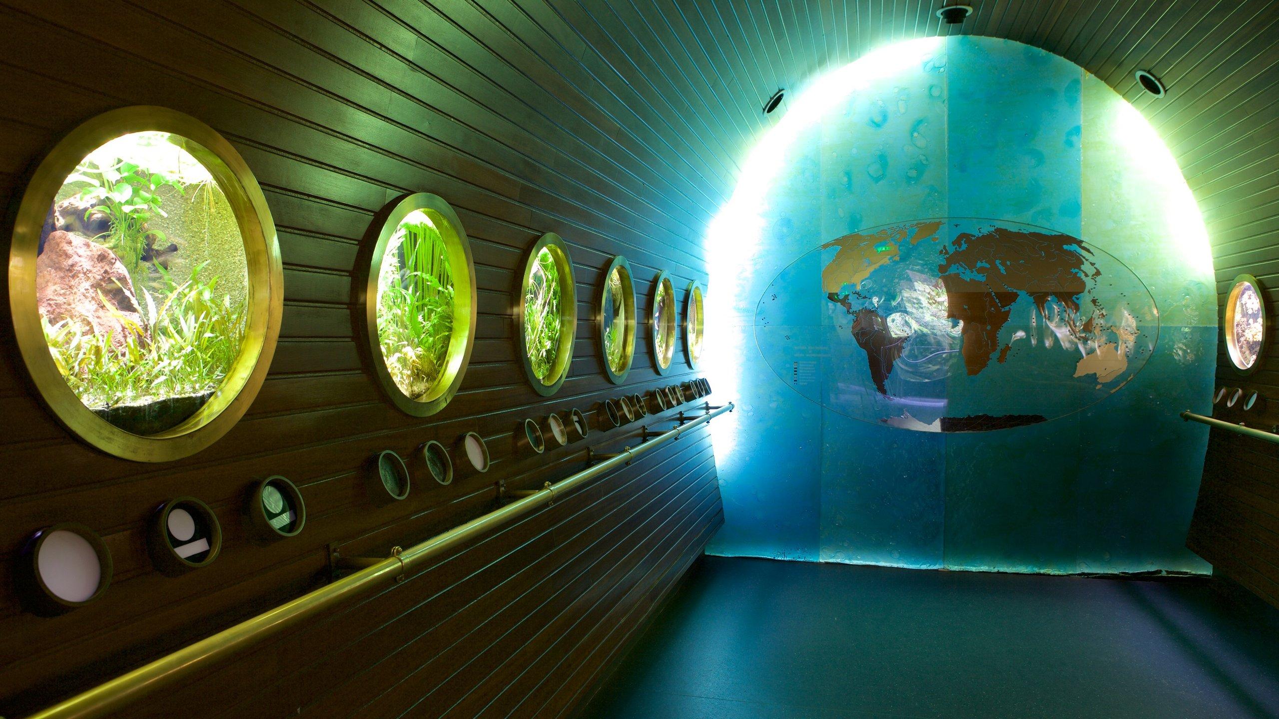 Musée Aquarium de Nancy, Nancy, Meurthe-et-Moselle (Department), Frankreich