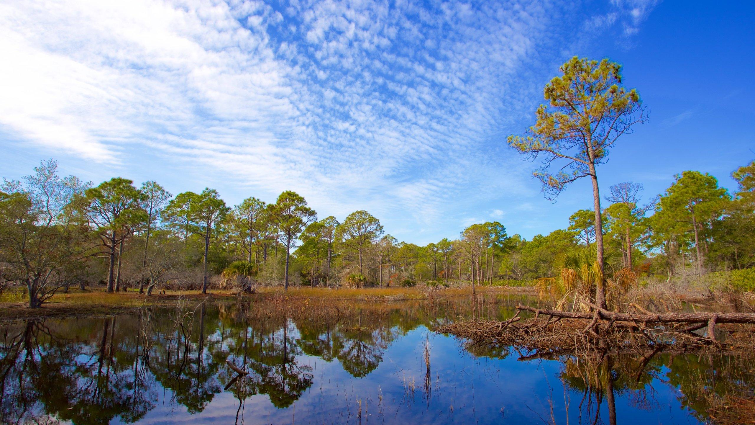 St. Andrews State Park, Panama City Beach, Florida, United States of America