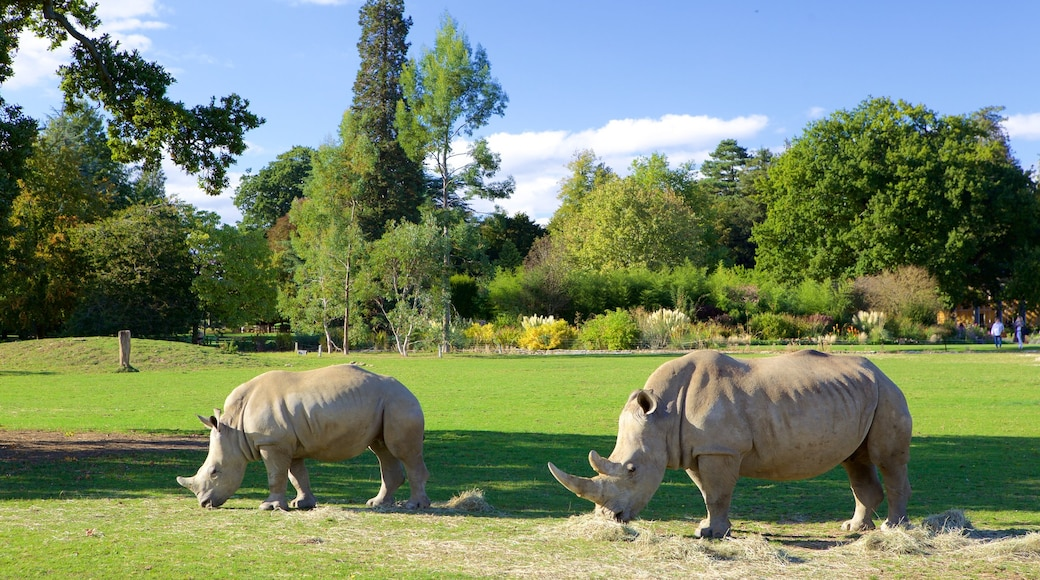 Oxfordshire which includes zoo animals and dangerous animals
