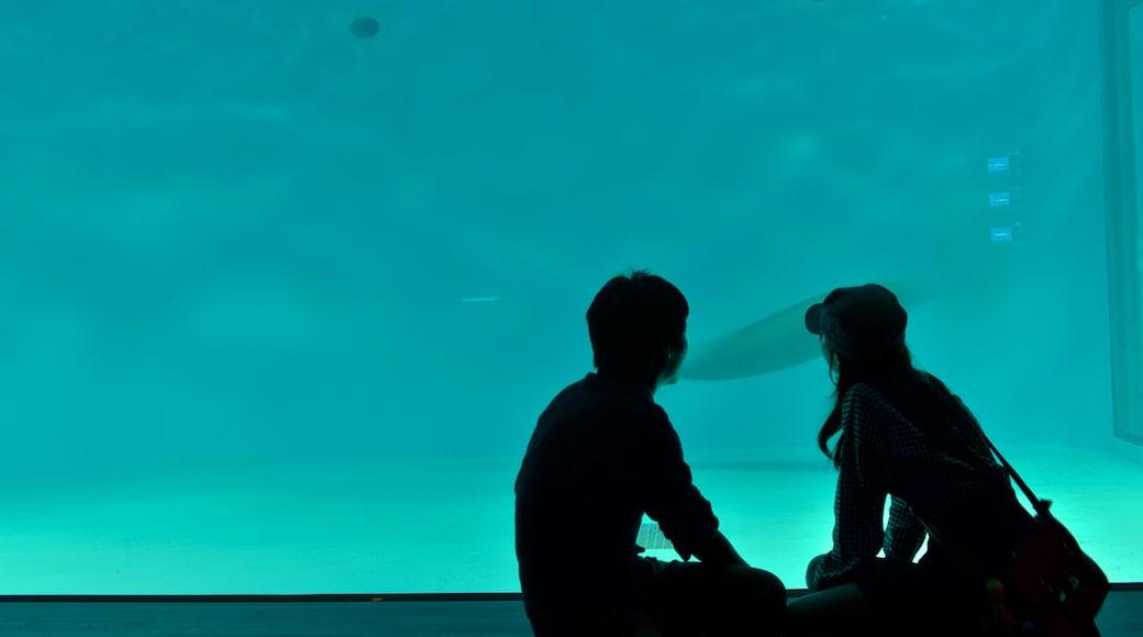 Miyajima Aquarium showing marine life as well as a couple