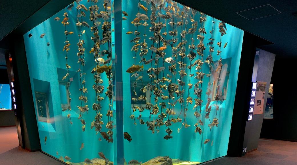 Miyajima Aquarium showing marine life and zoo animals