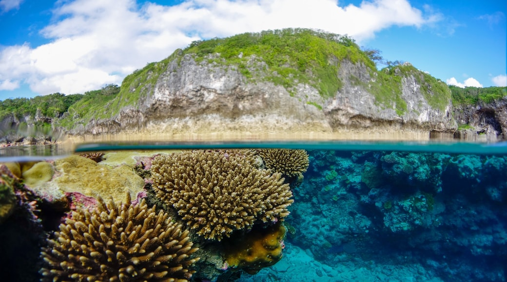 Niue featuring coral