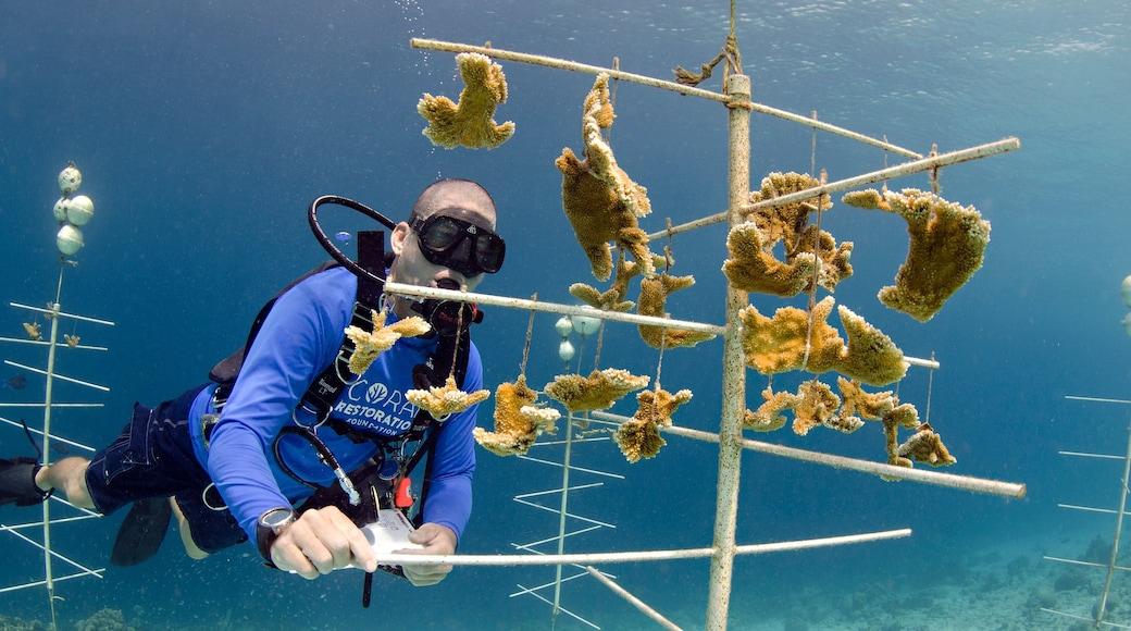 Bonaire bevat scuba en ook een man