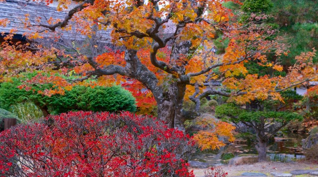 Takayama Jinya showing autumn leaves