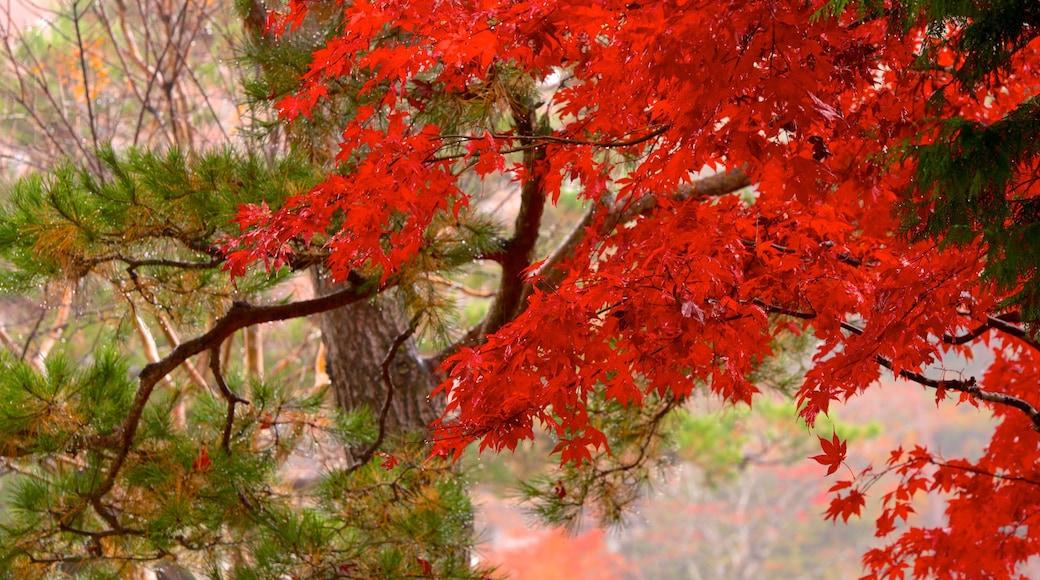 Hida Minzoku Mura montrant feuilles d\'automne