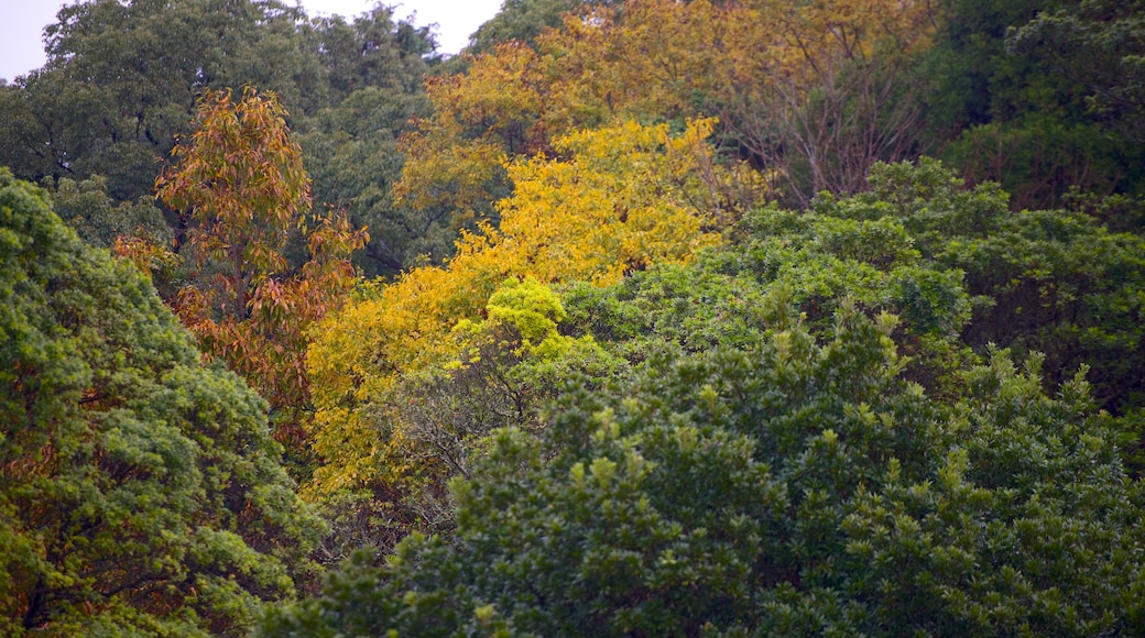 Kiyomizugaoka Park featuring autumn leaves