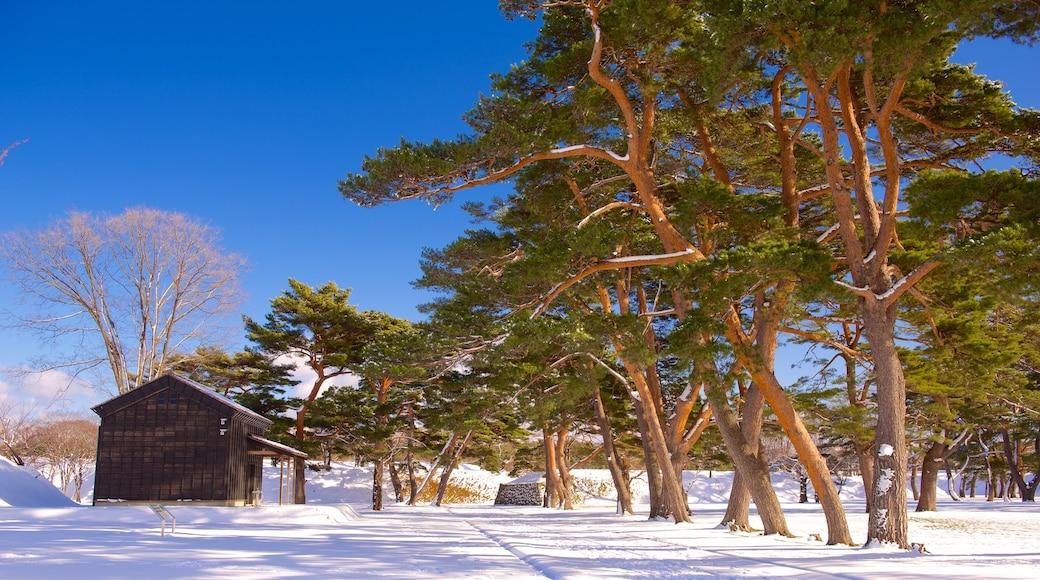 Fort Goryokaku featuring snow