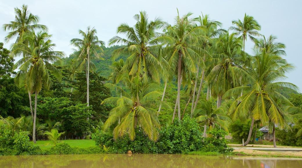 Lamai Beach bevat tropische uitzichten