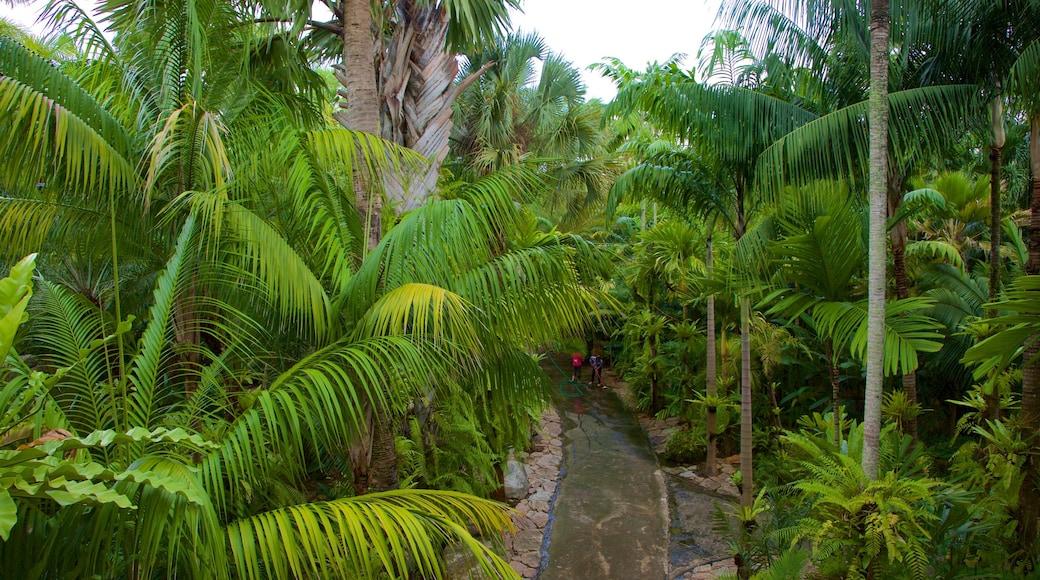 สวนนุงนุช เนื้อเรื่องที่ ป่าฝน