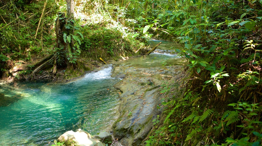 Mayfield Falls featuring rainforest and a river or creek
