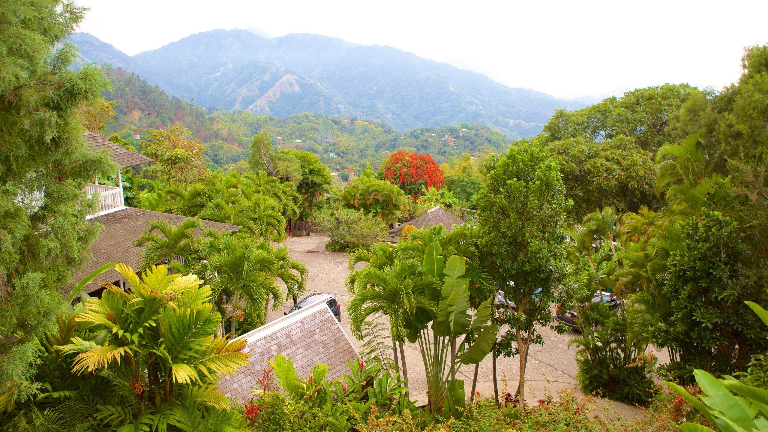 Irish Town, Saint Andrew, Jamaica