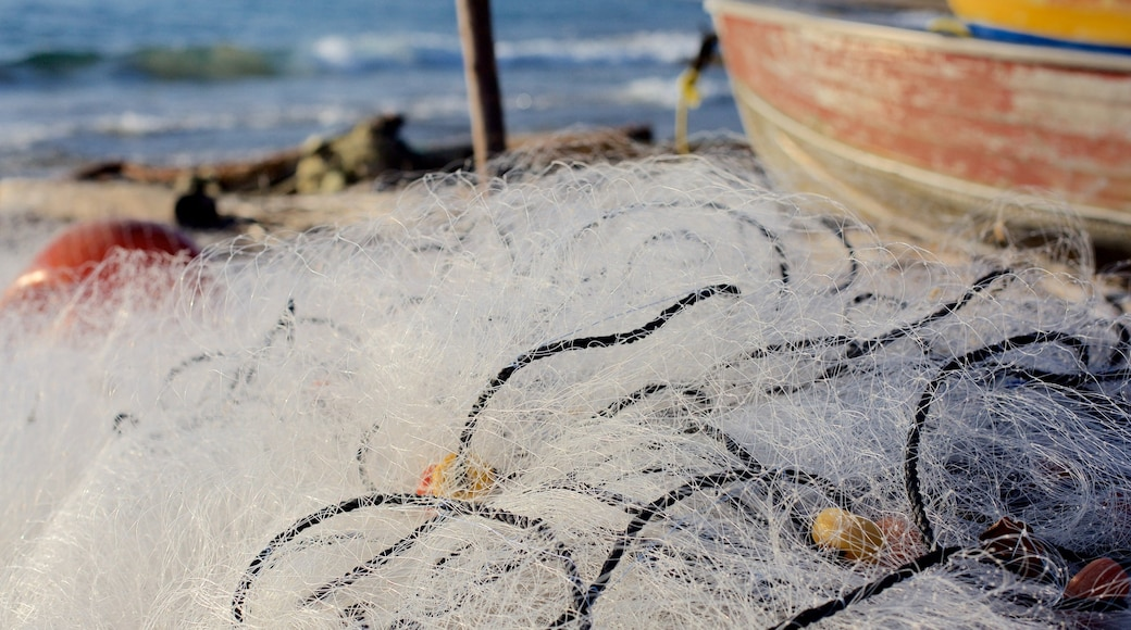 South Coast showing fishing