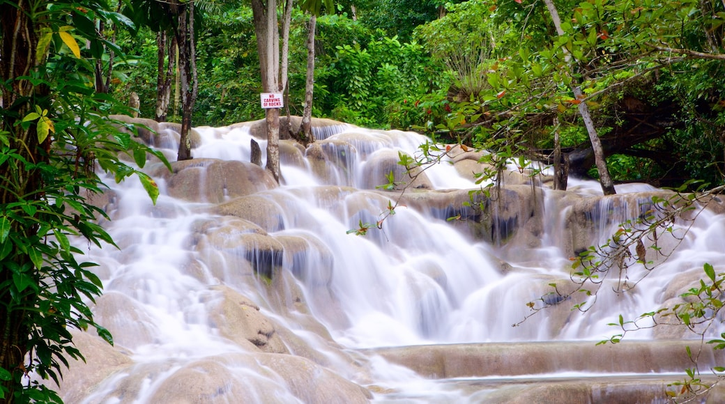 Dunn\'s River Falls which includes a waterfall and rainforest