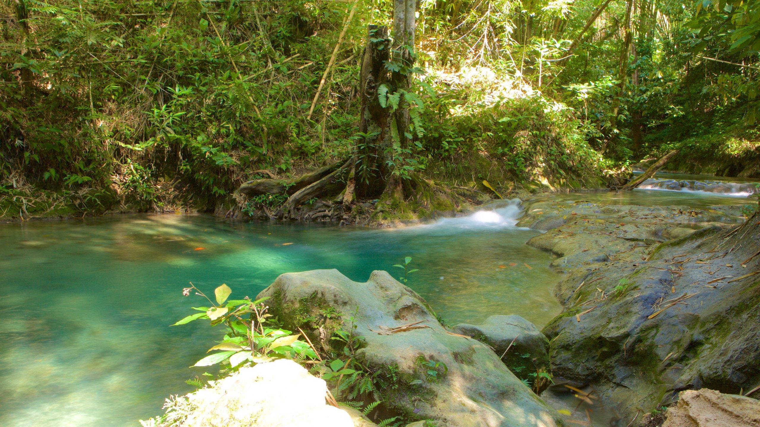 Westmoreland, Jamaica
