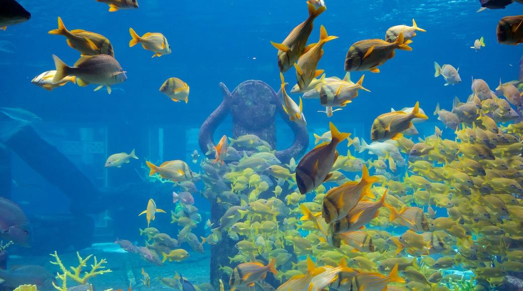 Atlantis Aquarium mit einem Meeresbewohner