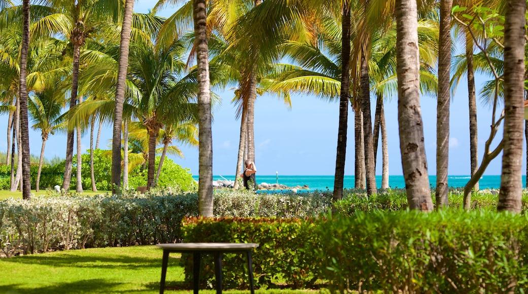 Lucaya Beach featuring a garden