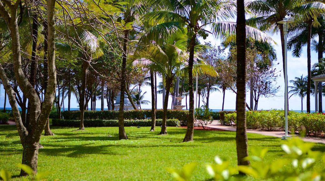 Lucaya Beach que inclui um jardim