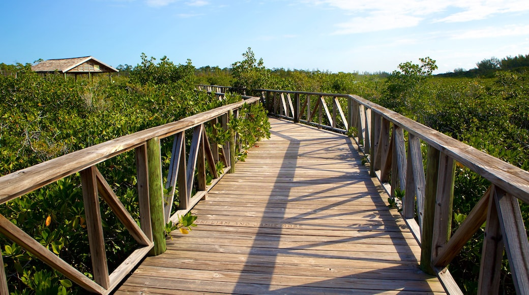 Lucayan National Park showing a bridge and mangroves