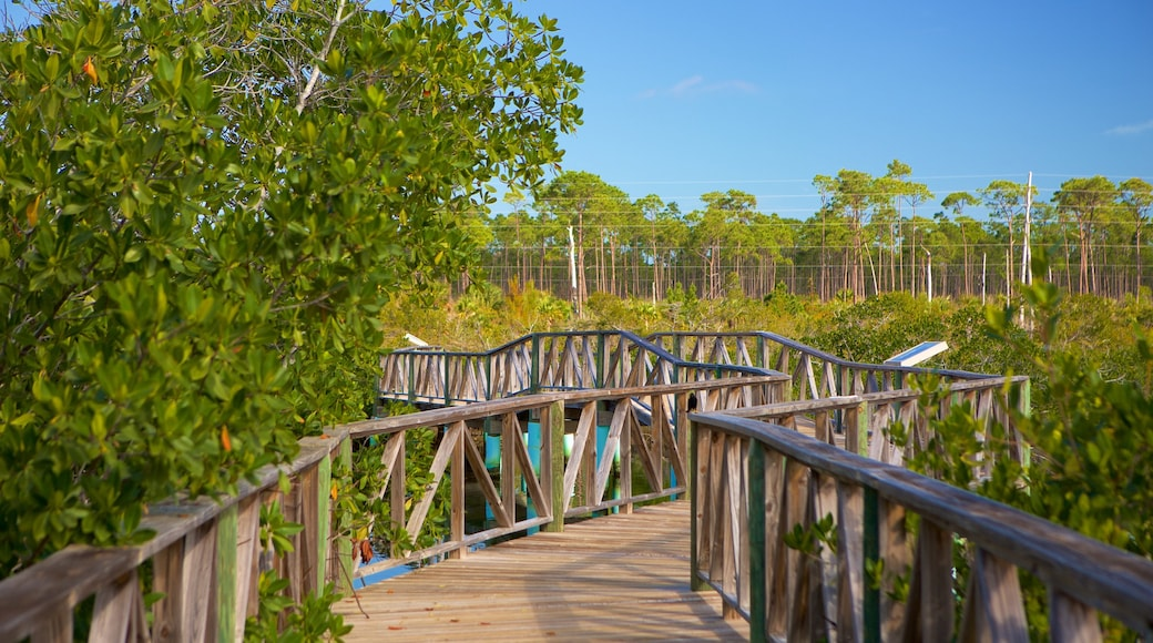Lucayan National Park showing mangroves and a bridge