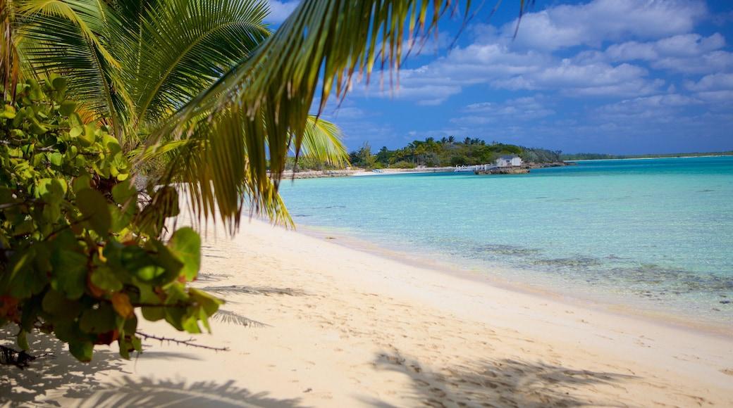 Palm Bay Beach bevat een strand en tropische uitzichten
