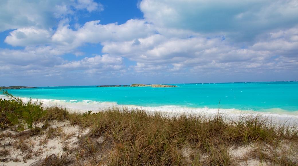 Tropic of Cancer Beach showing a sandy beach