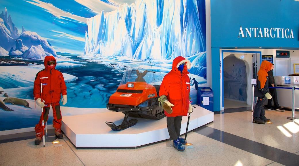 International Antarctic Centre featuring interior views