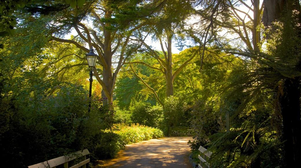 Mona Vale ofreciendo un parque