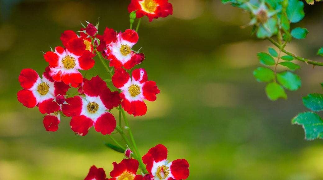 Mona Vale mostrando flores