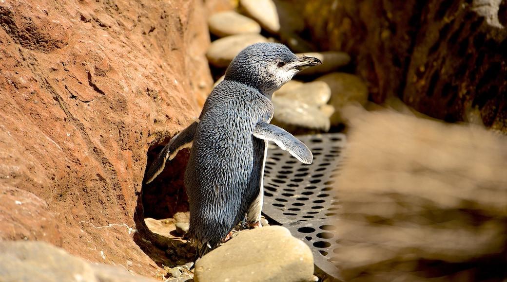 International Antarctic Centre featuring zoo animals and bird life