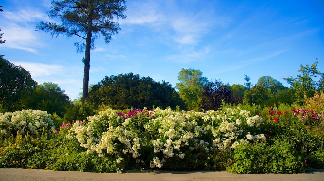 Christchurch Botanic Gardens showing a garden