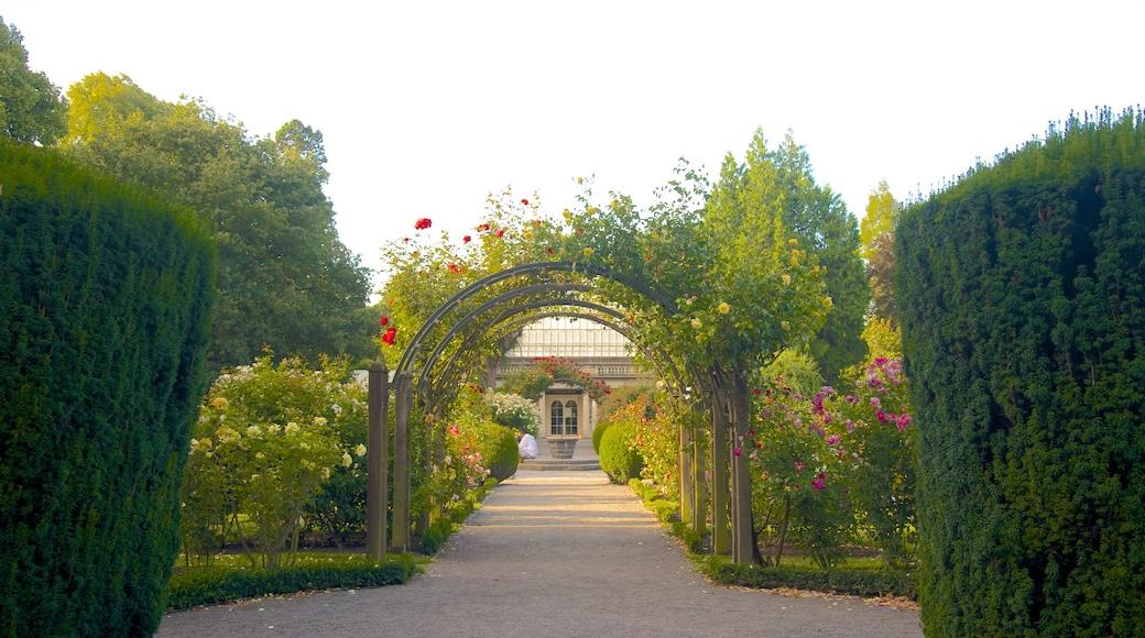 Christchurch Botanic Gardens featuring a park
