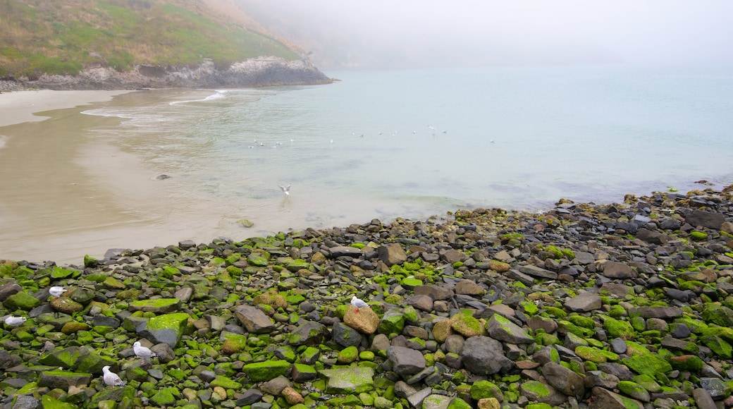 Royal Albatross Centre showing rocky coastline and mist or fog